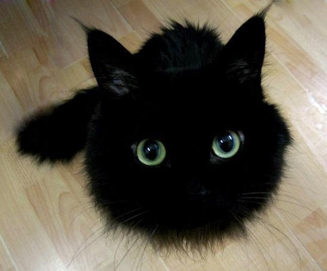 fekete-macska,hiedelem,péntek 13,babona, | Kreatív Magazin